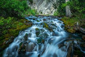 Creek flowing over moss covered rocks, Grassi Lakes Creek, Canmore, Alberta, Canada