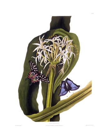 https://imgc.allpostersimages.com/img/posters/crinum-pedunculatum-swamp-lily-with-butterflies_u-L-PSCOCK0.jpg?p=0