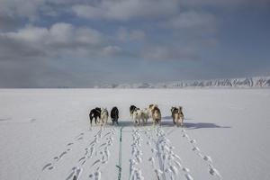 A Husky Dog Sled Team on the Sea Ice by Cristina Mittermeier