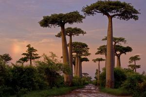 Alley of the Baobabs in Madagascar by Cristina Mittermeier