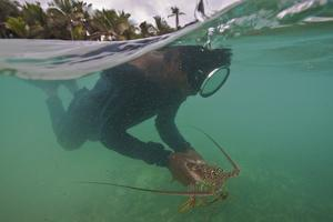 Miskito Indian Dives for Lobsters in the Coral Reefs Off the Gracias a Dios Municipality, Honduras by Cristina Mittermeier