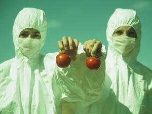 Scientists Holding GM Tomatoes by Cristina
