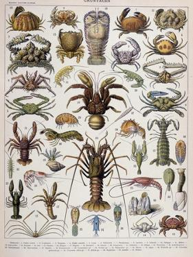 Crustacean Varieties