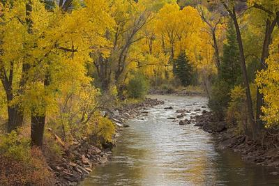 https://imgc.allpostersimages.com/img/posters/crystal-river-white-river-national-forest-colorado-usa_u-L-PN6T2U0.jpg?artPerspective=n