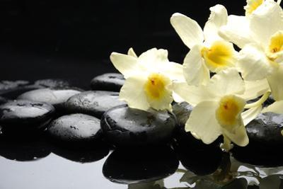 Beautiful Orchid and Stone with Water Reflection by crystalfoto