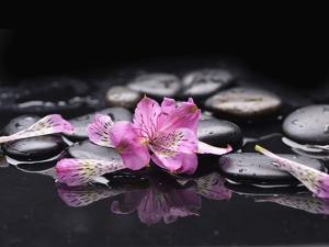 Beautiful Orchid Petals with Black Stones by crystalfoto