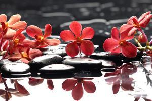 Branch Red Orchid with Zen Stones Reflection by crystalfoto
