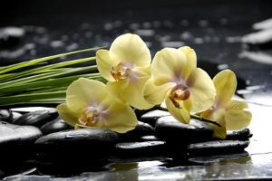 Oriental Spa with Orchid and Bottles with Essential Oil and Palm Leaf by crystalfoto
