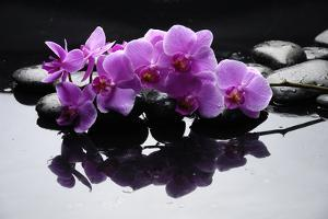 Purple Orchid and Black Stones with Reflection by crystalfoto