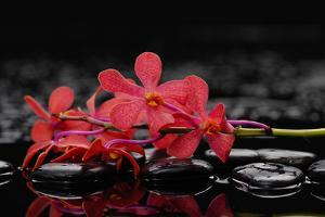 Red Branch Orchid Flower and Therapy Stones by crystalfoto