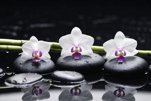 Spa Still Life with Three Orchid and Zen Stones with Bamboo Grove Reflection by crystalfoto