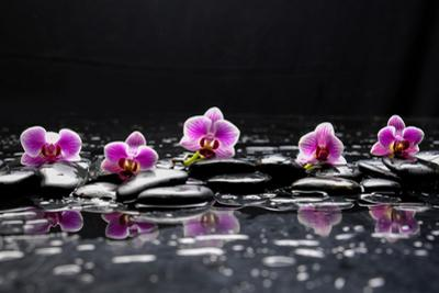 Still Life with Black Stone and Five Orchid by crystalfoto