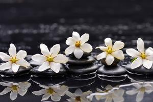 Still Life with Four Gardenia with Therapy Stones by crystalfoto