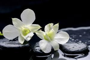 Still Life with Two White Orchid with Stones by crystalfoto