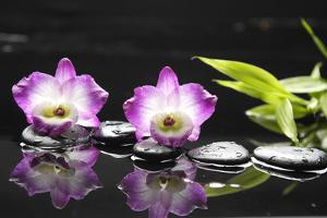 Two Orchid and Stones with Bamboo Green Leaf by crystalfoto