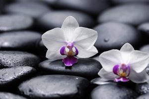 Two White Orchid with Therapy Stones by crystalfoto