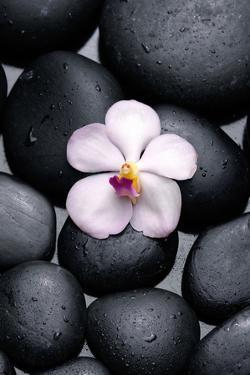 White Orchid with Therapy Stones by crystalfoto