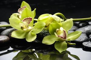 Zen Stones and Green Orchids with Water Drops by crystalfoto