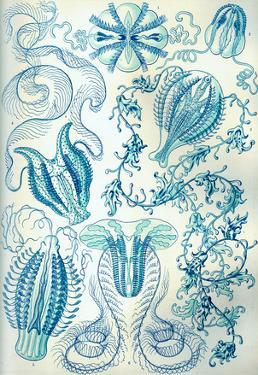 Ctenophorae Nature Art Print Poster by Ernst Haeckel