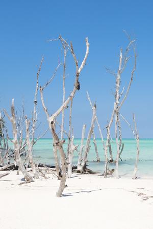 https://imgc.allpostersimages.com/img/posters/cuba-fuerte-collection-wild-white-sand-beach-ii_u-L-Q1AC4ZJ0.jpg?p=0