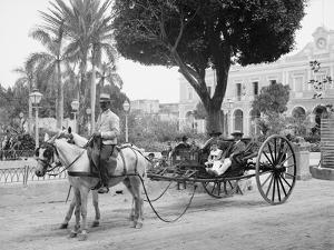 Cuban Volanta or Large Wheeled Carriage Transports Tourists