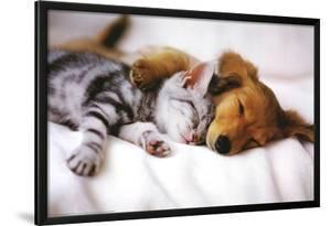 Cuddles (Sleeping Puppy and Kitten) Art Poster Print