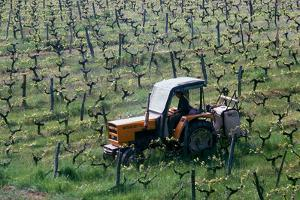 Cultivation of the grapevines in Spring. France