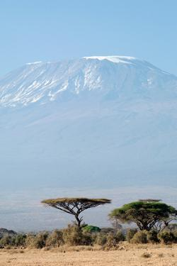 Mount Kilimanjaro behind Acacia Trees, Amboseli National Park, Kenya by Cultura Travel/Philip Lee Harvey