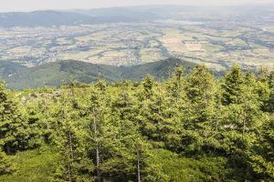 Mountain Landscape from Skrzyczne. Hillside Covered with Pine Trees and Tree Stumps in the Green Va by Curioso Travel Photography