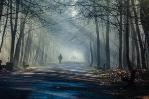 Road and Sunbeams in Strong Fog in the Forest, Poland. by Curioso Travel Photography