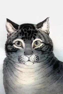 Favorite Cat by Currier & Ives