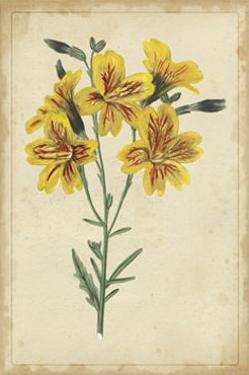 Curtis Blooms in Yellow IV