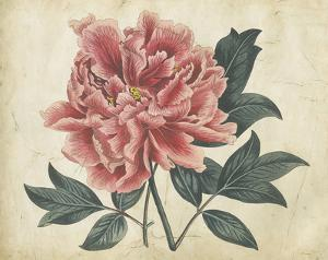 Embellished Peony Garden I by Curtis