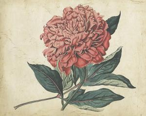 Embellished Peony Garden II by Curtis