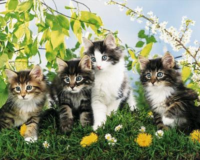 Cute Cats (4 Kittens) Art Poster Print