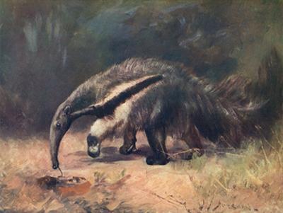 Ant-Eater, Cuthbert Swan