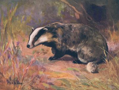 Badger, Swan, Wild Beasts