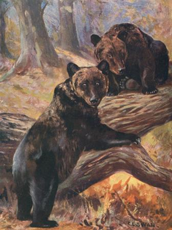Bears, Cuthbert Swan