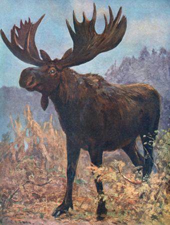 Moose (Elk), Cuthbert Swan