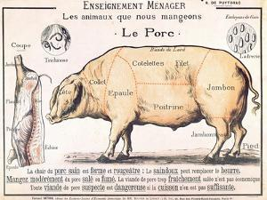 Cuts of Pork, illustration from a French Domestic Science Manual by H. de Puytorac, 19th century