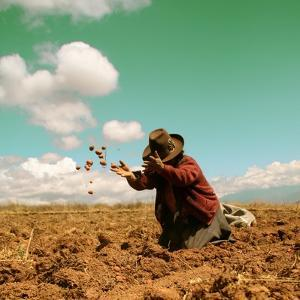 Potato Harvest In The Andes Of Peru by cwwc