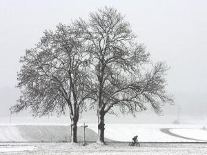 Cyclist Passes a Tree Covered with Snow, Southern Germany