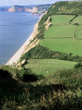 Coastline Near Sidmouth, Devon, England, United Kingdom by Cyndy Black