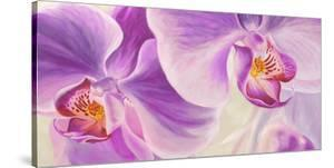 Purple Orchids by Cynthia Ann