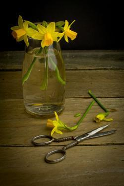 Yellow Spring Flowers Being Trimmed and Put into a Glass Vase by Cynthia Classen