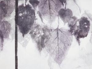 Catalpa by Cynthia MacCollum