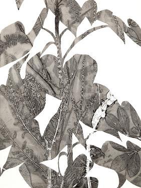 Losarim by Cynthia MacCollum