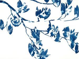 Magnolia by Cynthia MacCollum