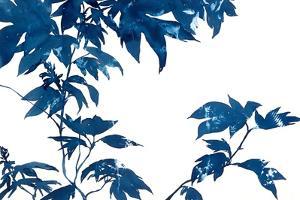 Quercifolia by Cynthia MacCollum