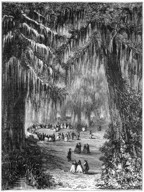 Cypress Grove at Chapultepec, Mexico City, 1877
